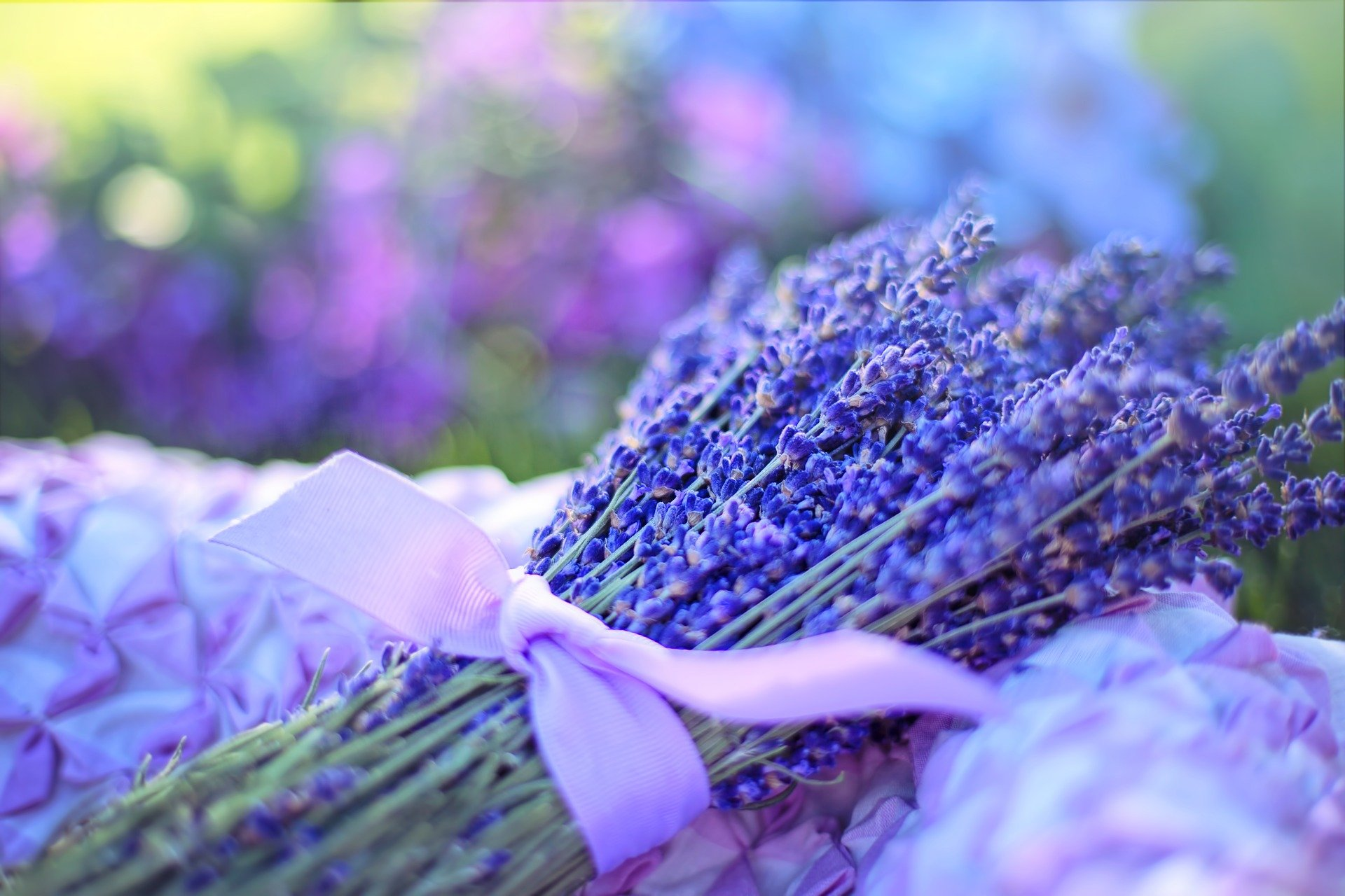 bunch of lavender flowers